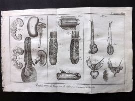 Diderot 1780's Antique Medical Print. Anatomie 20, 21. Penis Study